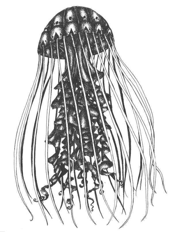 jellyfish inked